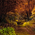 Earth Tones In A Illinois Woods by Thomas Woolworth