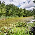 East Cramlington Nature Reserve by David Head