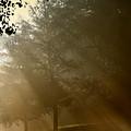 East Park Morning by Carolyn Fletcher