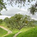East Ridge Trail -  Spring by Karen  W Meyer