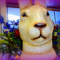 Easter Bunny Bouquet by Ed Weidman