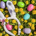 Easter Eggs And Bunny Ears by Teri Virbickis