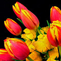 Easter Tulips And Roses by Marie Hicks