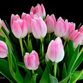 Easter Tulips  by Jeannie Rhode