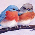Eastern Bluebirds by Janet Zeh