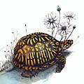Eastern Box Turtle by Katherine Miller