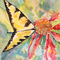 Echinacea Butterfly by Tina Agnes