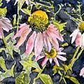 Echinacea Coneflower 2 by Derek Mccrea