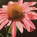 Echinacea Flower by Betty-Anne McDonald