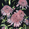 Echinacea Pinks by Arlene  Wright-Correll