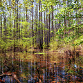 Edge Of The Swamp 2 by Susan Rissi Tregoning