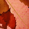 Edgy Leaves by Trish Hale