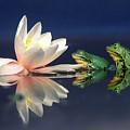 Edible Frog Rana Esculenta Two Frogs by Wim Weenink