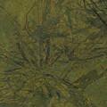 Edition 1 Kelp by Kristin Doner
