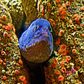 Eel In A Crack Between Two Anemone Worlds In Monterey Aquarium-california by Ruth Hager