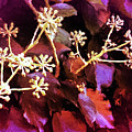 Efeu Ivy Vines Pink by Mona Stut