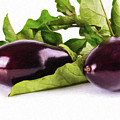Eggplant - Veg1659784 by Dean Wittle
