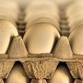 Eggs by Evelina Kremsdorf