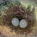 Eggs In A Nest by Susan Vineyard