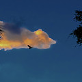 Egressing Egret by DigiArt Diaries by Vicky B Fuller