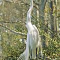 Egret 1 by Michael Peychich
