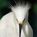 Egret 2 by Anthony Jones