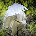 Egret - 2975 by Paulette Thomas