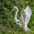 Egret - 3419 by Paulette Thomas
