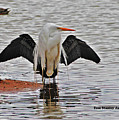 Egret And Cormorant Wings by Tom Janca