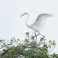 Egret Balance by Keith Lovejoy