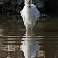 Egret Catches A Stickleback by Bruce Frye