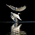 Egret Dance by Emily Bristor