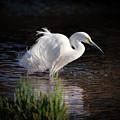 Egret by Elaine Malott