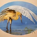 Chloe The  Flying Lamb Productions                  Egret Fishing by Sigrid Tune
