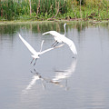 Egret Flight by Teresa Blanton