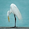 Egret Foot Inspection by Michael Thomas