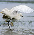 Egret Hunting by Angela Rath