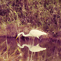 Egret In Abstract by HW Kateley