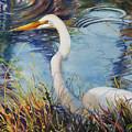 Egret In Cameron Marsh by Sue Zimmermann