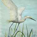 Egret In Flight by Dennis Vebert
