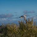 Egret In Flight by Enrico Croce