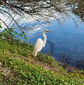 Egret In Florida Color by Shane Seymour