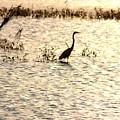 Egret In Sunset Water by Diane Merkle