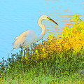 Egret In The Lake Shallows by Patricia Twardzik