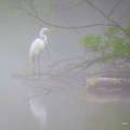 Egret In The Mist by George Savic