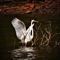 Egret Ix by Gary Adkins