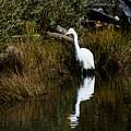 Egret by Jamie Brewer