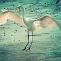 Egret Landing by Melinda Dreyer