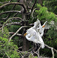 Egret Morning by Lydia Holly