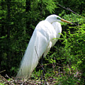Egret On Guard by Cynthia Guinn